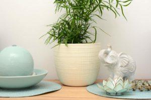 Foto Bambus und Elefant